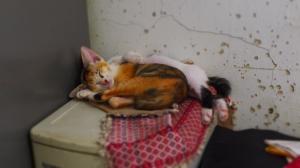 Spooning kittens...so cute it makes me sick!